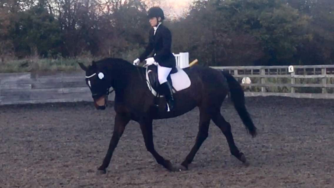 Horse of the Week - Aulton Classic owned by Julie Springett