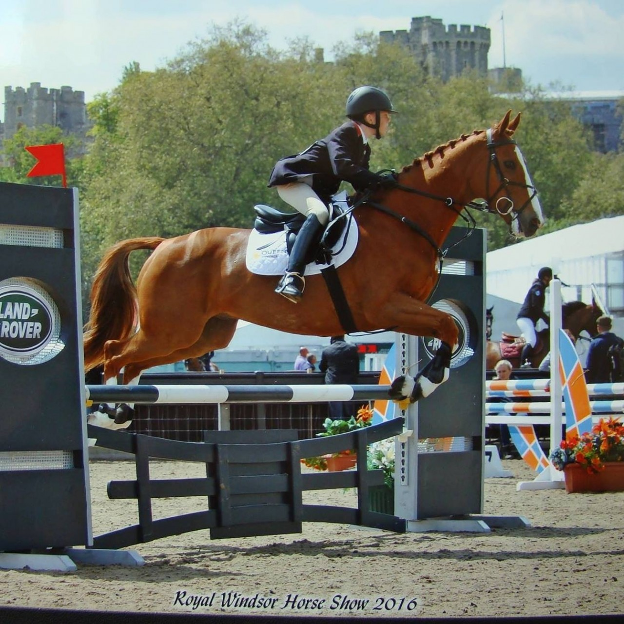 """Horse of the week : Noah owned by the """"family Field"""""""