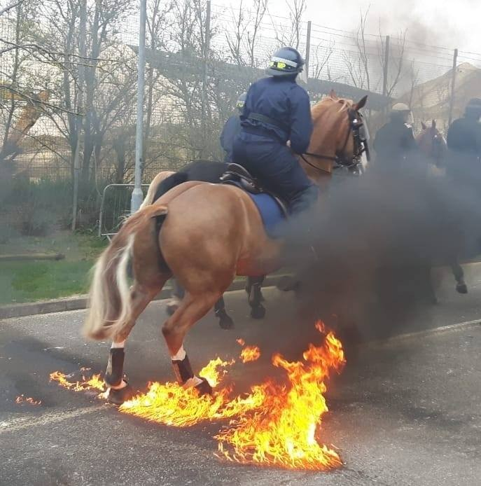 Forces Equine Police members out in force!